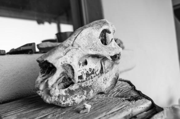 Skull-00656